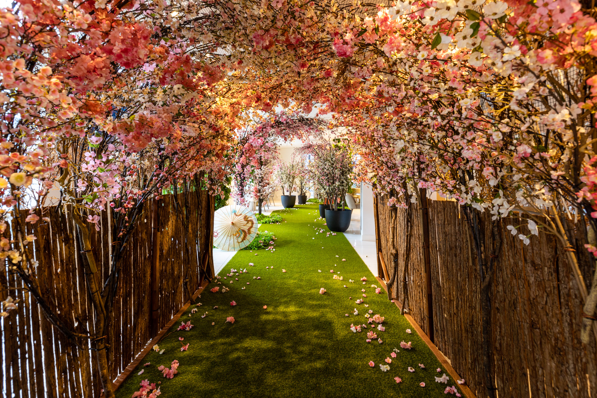 Celebrate Cherry Blossom Season at Mastery by Crown Group
